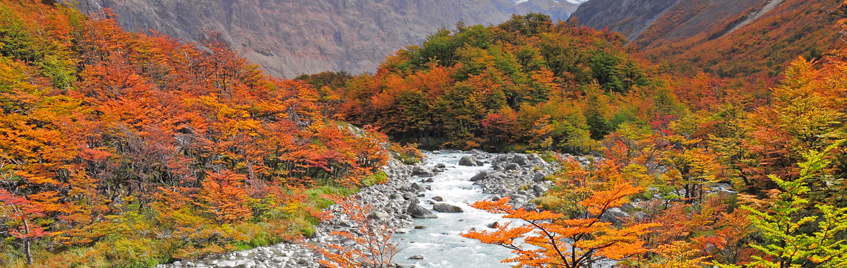 Fall leaves and colors in a natural setting near a river