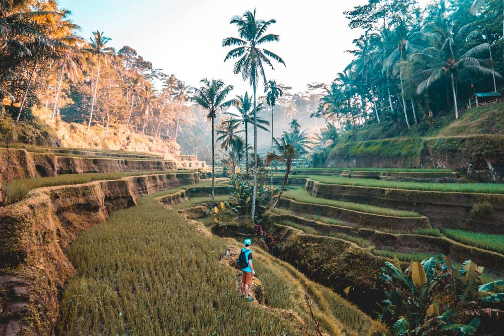 man standing in the tagallang rice fields in Bali